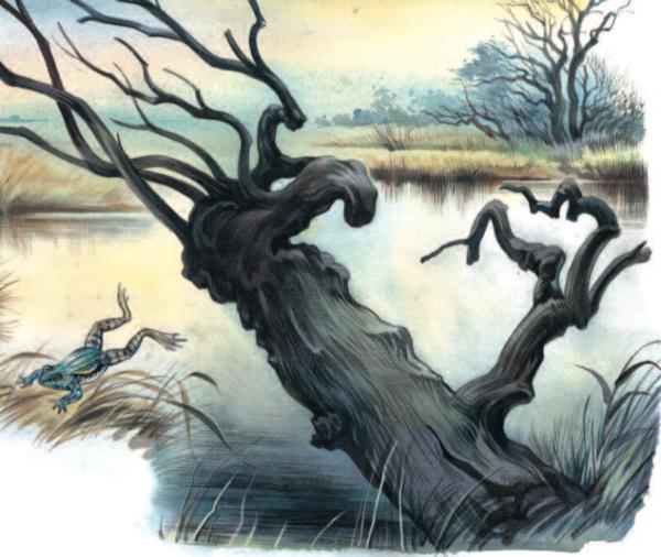 ein knorriger Baum an einem See